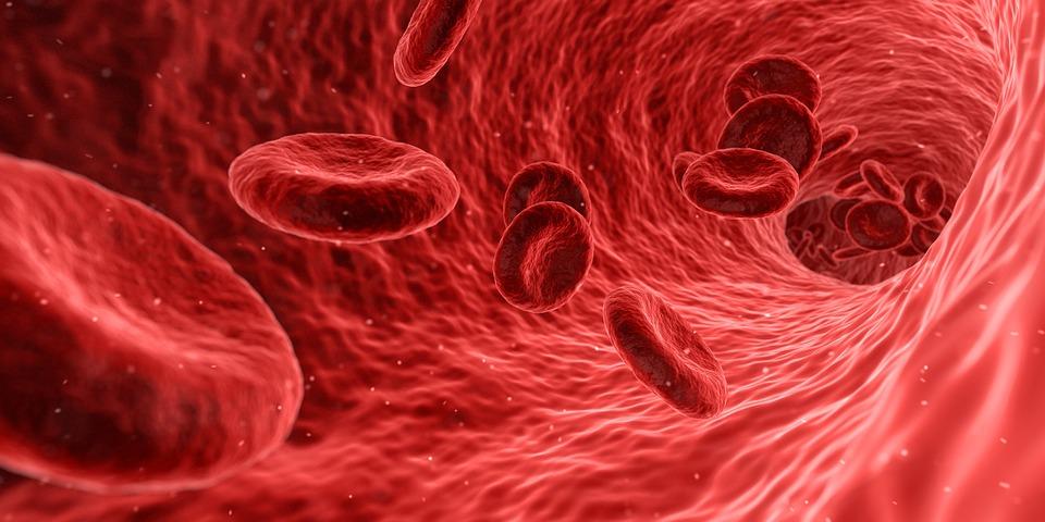 krv i krvna plazma